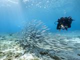 Unterwasser - Riff - Fisch - Fischschwarm - Schwamm - Taucher - Tauchen - Curacao - Karibik - 4K - 121324229