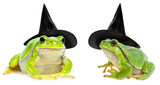 halloween frog  witch with a hat