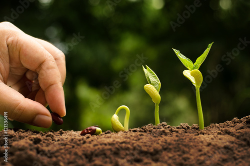 Agriculture and Sow Seed growing step concept
