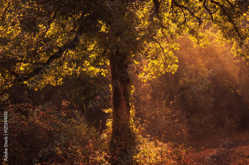 Aluminium Betoverde Bos Enchanted Forest