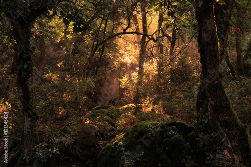 Canvas Betoverde Bos Enchanted Forest. Lovely Autumn Forrest with Sunrays in Sicily, Europe