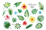 Set of watercolor leaves and flowers.