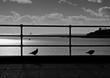 Постер, плакат: Plymouth Hoe Pigeons