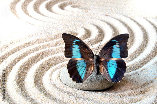 Foto op Canvas Zen Butterfly