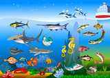 new collection of marine animals