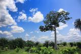 jungle du togo - 121363602