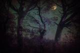 Bosque fantástico