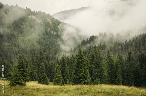 fog covering fir trees forest in mountain landscape