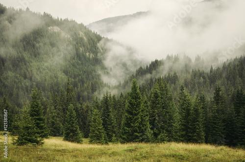 mgla-obejmujaca-jodly-las-w-gorskiej-scenerii