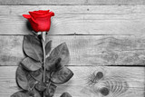 Red rose on black and white wood