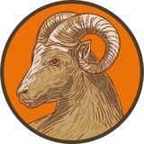 Ram Goat Head Circle Drawing
