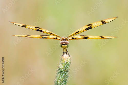 Halloween Pennant Poster