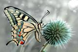 Butterfly - 121427488