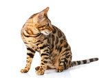 cat urine smell in house no cat