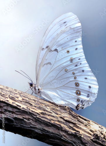 Motyl na gałęzi.
