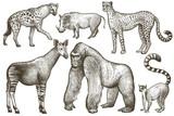 African animals hyena, okapi, cheetah, gorilla, warthog, lemur. - 121442063