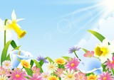 Abundance of blooming flowers at spring time