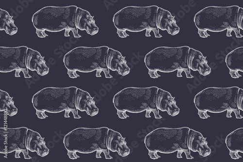 Seamless pattern with African hippopotamus. - 121448897