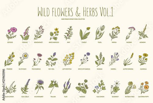 Wild flowers and herbs hand drawn set. Volume 1. Vintage vector illustration.