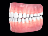3D Isolated Teeth. Tooths Dentistry Care Concept
