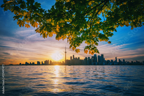 Toronto skyline with maple branches