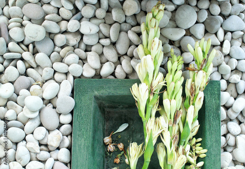 Poster tuberose flower on a stone white