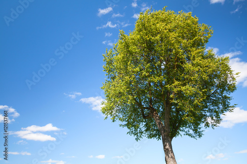 Green tree under blue sky and clouds
