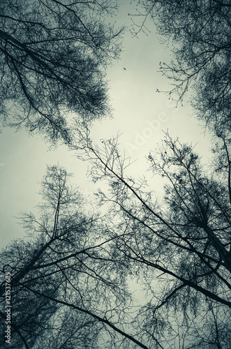 Fototapeta Leafless bare trees over cloudy sky