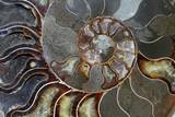 Beautiful Ammonites fossils