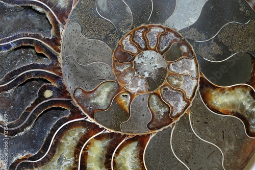 Beautiful Ammonites fossils Poster