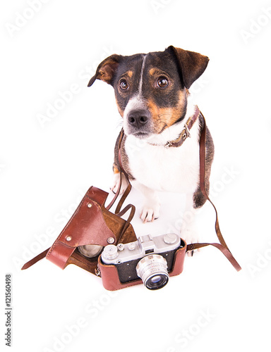 Jack Russell Terrier with a camera on a white background Poster