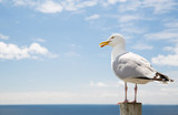 seagull over sea and blue sky - 121570634