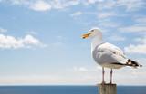 seagull over sea and blue sky - 121570634