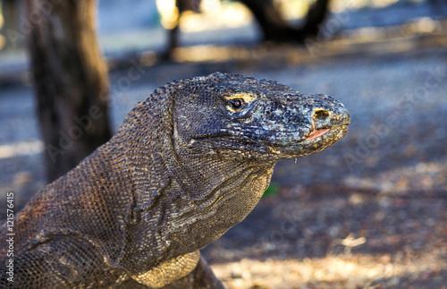 Foto op Plexiglas Krokodil A close up of a Komodo dragon, Komdo, Indonesia