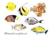 Watercolor fish. Sea fish set illustration isolated on white background