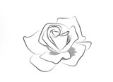 Tattoo art: Line drawing of a rose