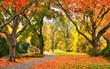 Park im Herbst in freundlich warmen Farben