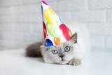 Zabawny kot w kapeluszu urodzinowym