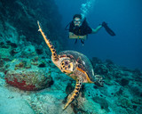 Scuba diver with Hawksbill turtle - 121709691