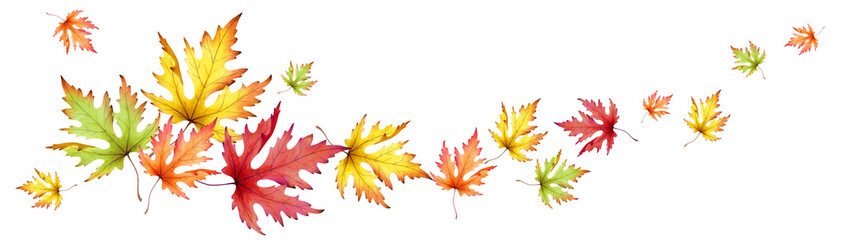 Autumn maple leaves. Horizontal panoramic image. Watercolor © dariaustiugova