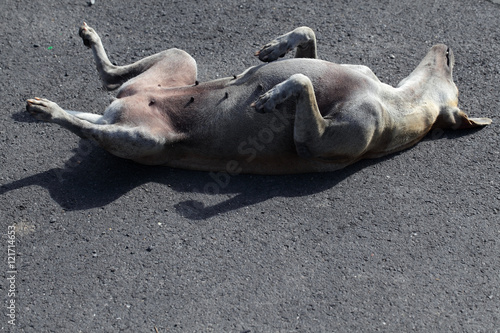 Deurstickers Franse bulldog sleeping stray dog