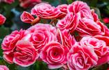 Fundo colorido com flores.