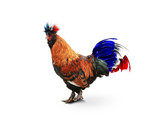 France, French colored rooster with big tail