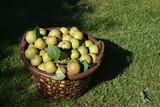 geerntete Äpfel im Korb