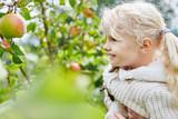 Blondes Mädchen hilft bei der Apfelernte