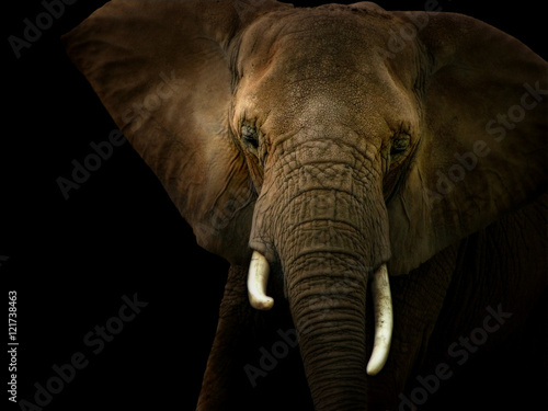 Poster Elephant Against Black Background