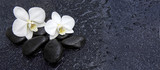 Fototapety Single white orchid and black stones close up.