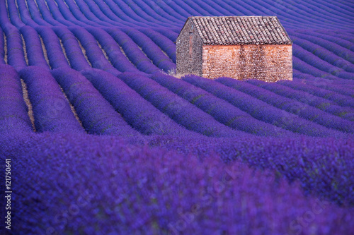 Poster Snoeien Stone hut on lavender field in Provence