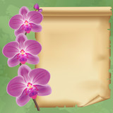 Vintage background with flower orchid and paper
