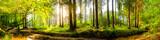Idylliczny las z potokiem o wschodzie słońca